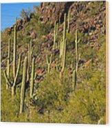 Sonoran Desert West Saguaro National Park Wood Print