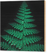 Soothing Fern Wood Print