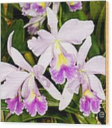 Sophronitis Orchid Wood Print