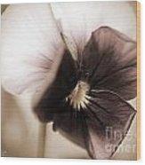 Sorbet Viola Wood Print