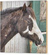 South Barrington Horse Wood Print