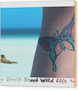 South Beach Wild Life Wood Print by Mike McGlothlen
