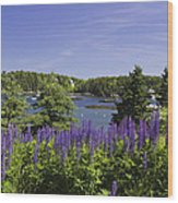 South Bristol And Lupine Flowers On The Coast Of Maine Wood Print
