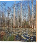 South Carolina Swamps Wood Print
