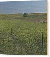 South Dakota Homestead Wood Print