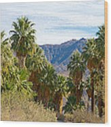 South Side View Of Andreas Canyon Trail In Indian Canyons-ca Wood Print