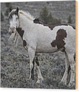 South Steens Wild Stallion Wood Print
