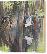 Southeast Missouri Swamp Wood Print