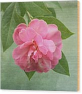 Southern Camellia Flower Wood Print