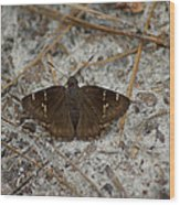Southern Cloudywing Wood Print