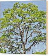 Southern Cypress Wood Print