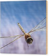 Southern Hawker Dragonfly  Wood Print