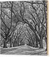 Southern Journey Bw Wood Print