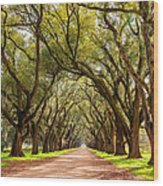 Southern Journey Paint Wood Print