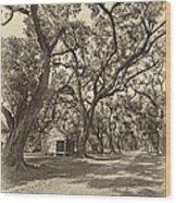 Southern Lane Sepia Wood Print by Steve Harrington