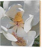 Southern Magnolia Blossom Wood Print
