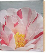 Southern Peppermint Beauty Wood Print