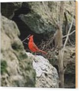 Southern Red Bird By The Flint River Wood Print