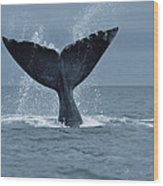 Southern Right Whale Fluke Argentina Wood Print