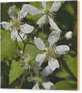 Southern Sawtooth Highbush Blackberry Blossoms - Rubus Argutus Wood Print