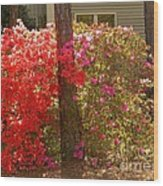 Southern Spring Color Wood Print