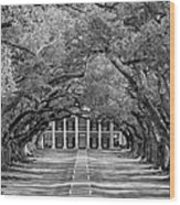 Southern Time Travel Bw Wood Print