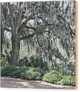 Southern Trees Wood Print