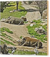 Southern White Rhinoceros In San Diego Zoo Safari Park In Escondido-california Wood Print