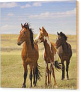 Southwest Wild Horses On Navajo Indian Reservation Wood Print