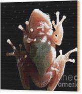 Space Frog Wood Print