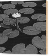 Space Lily Wood Print