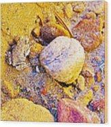 Spadefoot Toad Near Stones On Capitol Gorge Pioneer Trail In Capitol Reef National Park-utah Wood Print