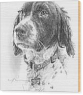 Spaniel Dog Pencil Portrait Wood Print