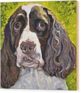 Spaniel The Eyes Have It Wood Print by Susan A Becker