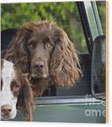 Spaniels In Car Wood Print