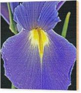 Spanish Iris Wood Print
