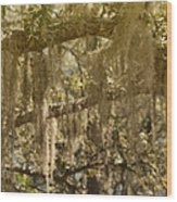 Spanish Moss On Live Oaks Wood Print by Christine Till