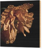 Spanish Poppy Wood Print