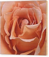 Spanish  Rose Wood Print