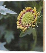Spark Gaillardia Flower Bud Wood Print