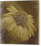 Sparkling Daisy Wood Print