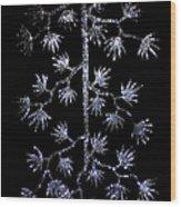 Sparkling Diamond Snowflakes Wood Print