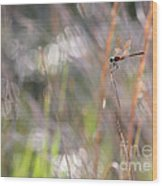 Sparkling Morning Sunshine With Dragonfly Wood Print