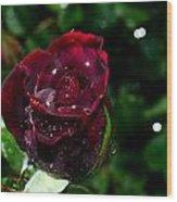 Sparkling Red Rose Wood Print