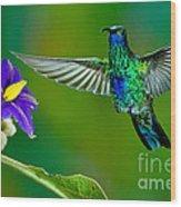 Sparkling Violetear Wood Print