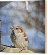 Sparrow 5   Wood Print