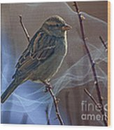 Sparrow In A Weave Wood Print