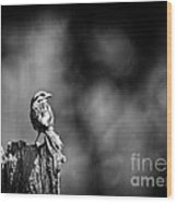 Sparrow In Black And White Wood Print