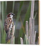 Sparrow In Reeds Wood Print