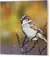 Sparrow In The Park Wood Print